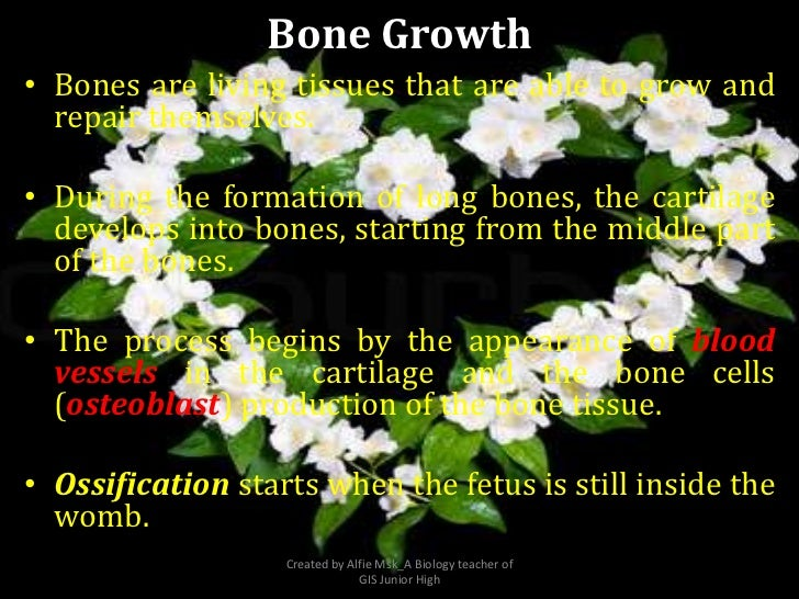 Bone Growth• Bones are living tissues that are able to grow and  repair themselves.• During the formation of long bones, t...