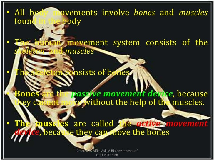 • All body movements involve bones and muscles  found in the body• The human movement system consists of the  skeleton and...