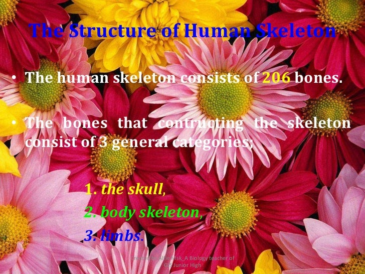 The Structure of Human Skeleton• The human skeleton consists of 206 bones.• The bones that contructing the skeleton  consi...