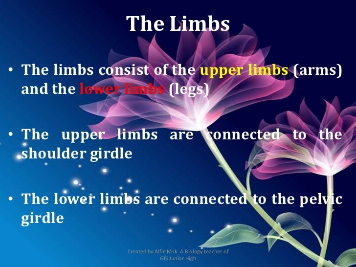 The Limbs• The limbs consist of the upper limbs (arms)  and the lower limbs (legs)• The upper limbs are connected to the  ...