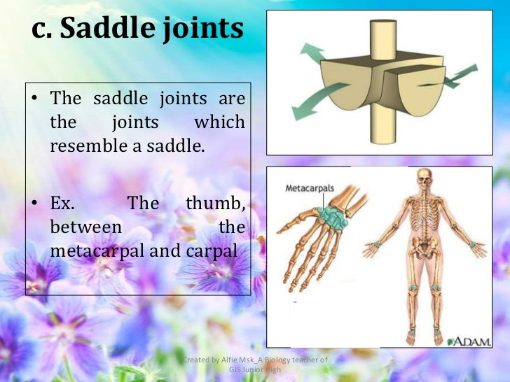 c. Saddle joints• The saddle joints are  the   joints    which  resemble a saddle.• Ex.     The thumb,  between           ...
