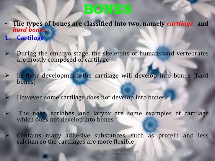 BONES• The types of bones are classified into two, namely cartilage and  hard bones.1. Cartilage   During the embryo stag...
