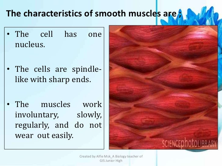 The characteristics of smooth muscles are ;• The cell     has        one  nucleus.• The cells are spindle-  like with shar...