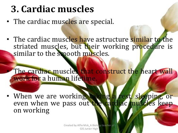 3. Cardiac muscles• The cardiac muscles are special.• The cardiac muscles have astructure similar to the  striated muscles...