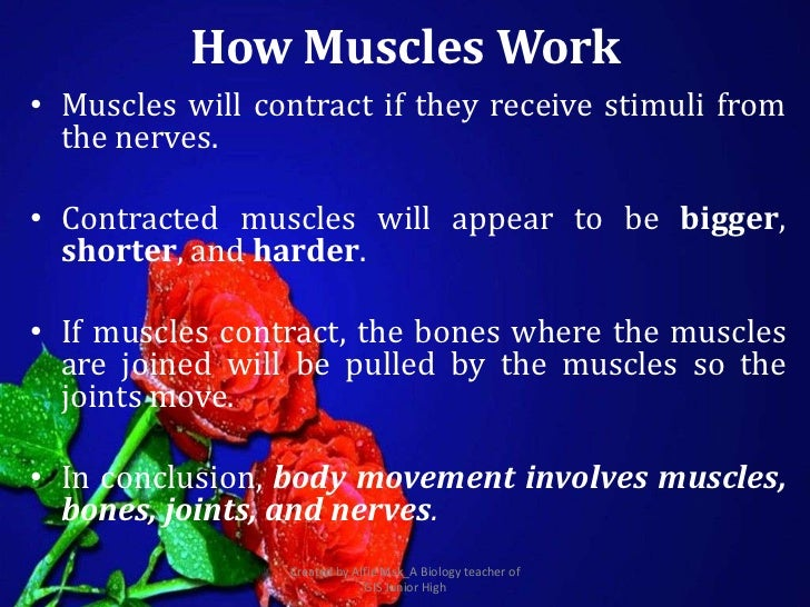 How Muscles Work• Muscles will contract if they receive stimuli from  the nerves.• Contracted muscles will appear to be bi...