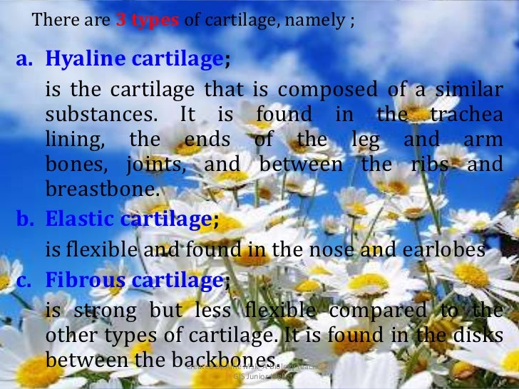 There are 3 types of cartilage, namely ;a. Hyaline cartilage;   is the cartilage that is composed of a similar   substance...