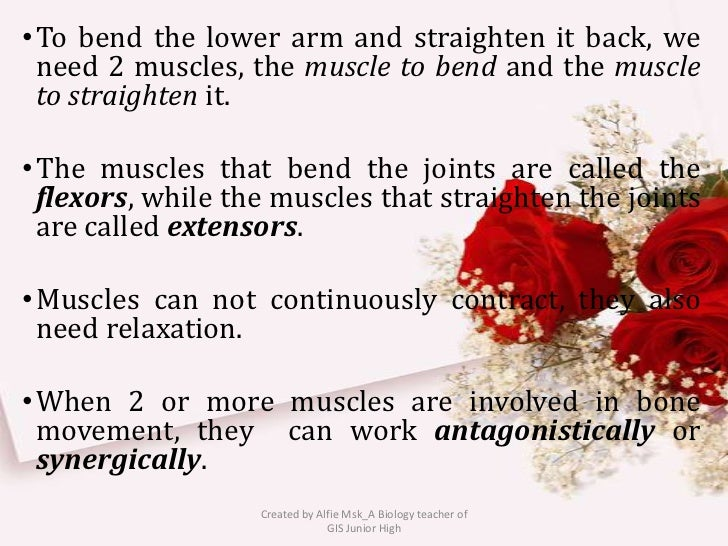 • To bend the lower arm and straighten it back, we  need 2 muscles, the muscle to bend and the muscle  to straighten it.• ...