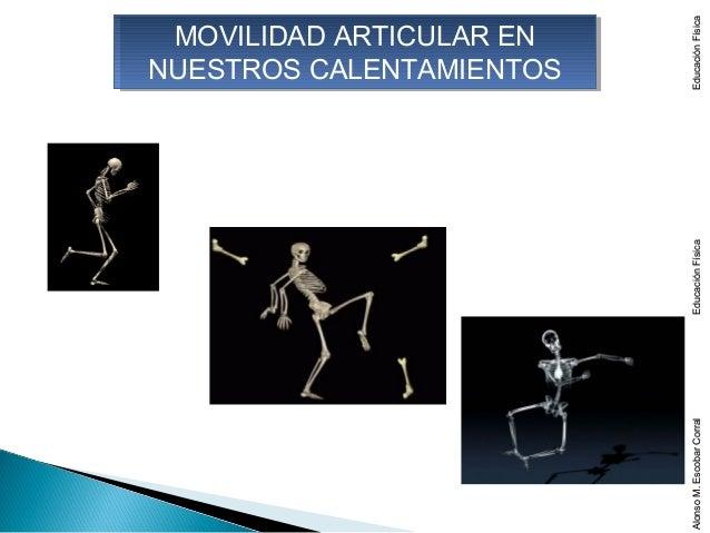 Educación Física MOVILIDAD ARTICULAR EN  MOVILIDAD ARTICULAR ENNUESTROS CALENTAMIENTOSNUESTROS CALENTAMIENTOS             ...