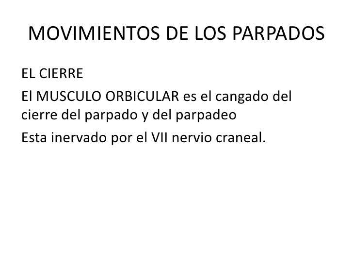 MOVIMIENTOS DE LOS PARPADOS<br />EL CIERRE<br />El MUSCULO ORBICULAR es el cangado del cierre del parpado y del parpadeo<b...