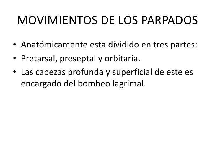 MOVIMIENTOS DE LOS PARPADOS<br />Anatómicamente esta dividido en tres partes:<br />Pretarsal, preseptal y orbitaria.<br />...