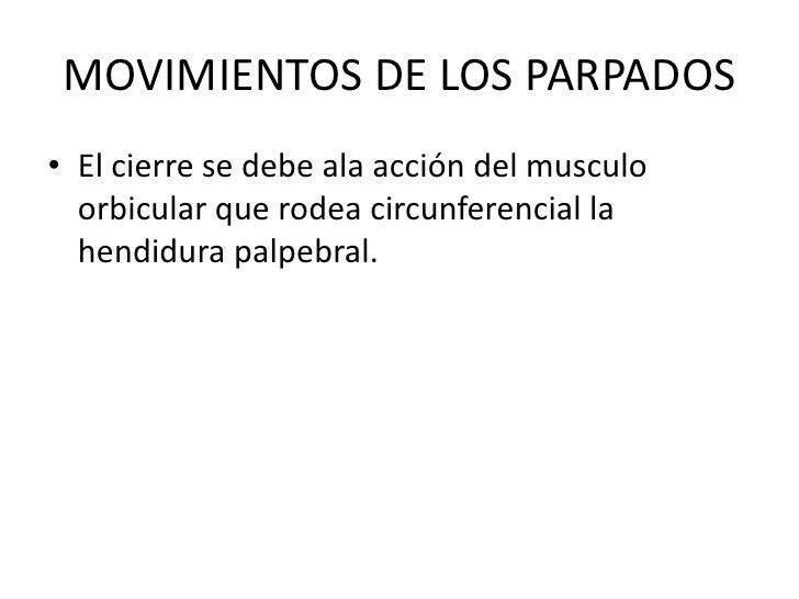 MOVIMIENTOS DE LOS PARPADOS<br />El cierre se debe ala acción del musculo orbicular que rodea circunferencial la hendidura...