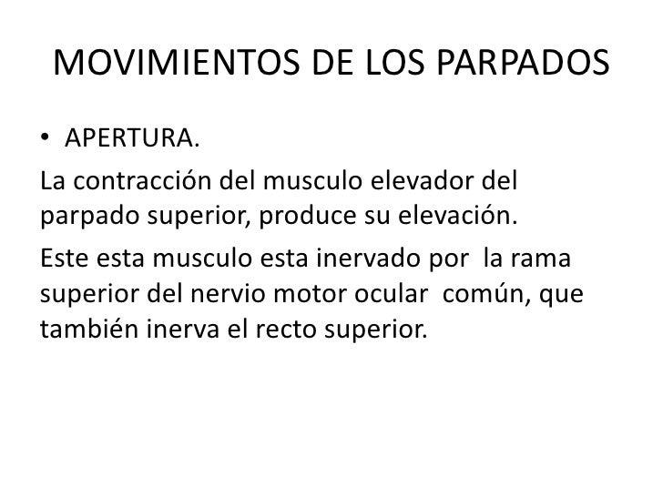 MOVIMIENTOS DE LOS PARPADOS<br />APERTURA.<br />La contracción del musculo elevador del parpado superior, produce su eleva...