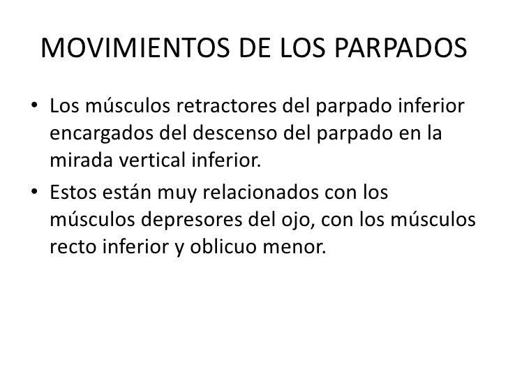 MOVIMIENTOS DE LOS PARPADOS<br />Los músculos retractores del parpado inferior encargados del descenso del parpado en la m...