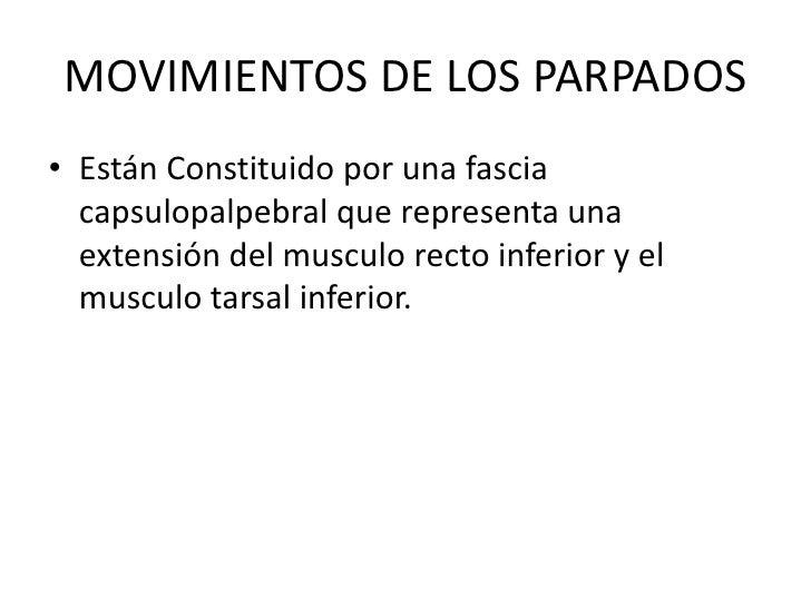 MOVIMIENTOS DE LOS PARPADOS<br />Están Constituido por una fascia capsulopalpebral que representa una extensión del muscul...