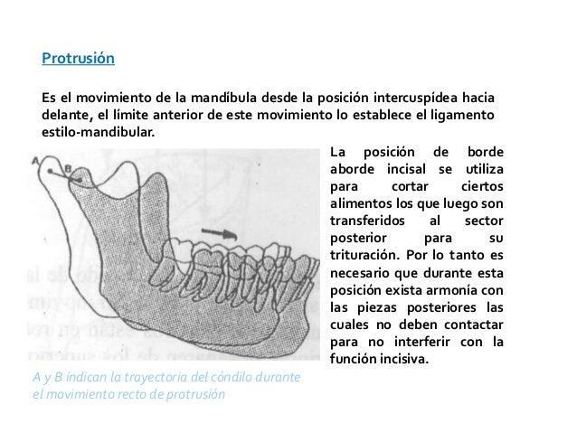 Protrusión  Es el movimiento de la mandíbula desde la posición intercuspídea hacia  delante, el límite anterior de este mo...
