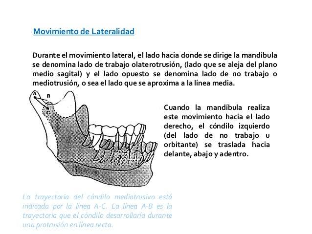 Movimiento de Lateralidad   Durante el movimiento lateral, el lado hacia donde se dirige la mandíbula   se denomina lado d...