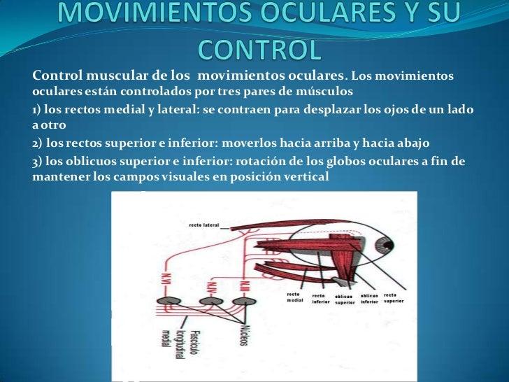 MOVIMIENTOS OCULARES Y SU CONTROL<br />Control muscular de los  movimientos oculares. Los movimientos oculares están contr...