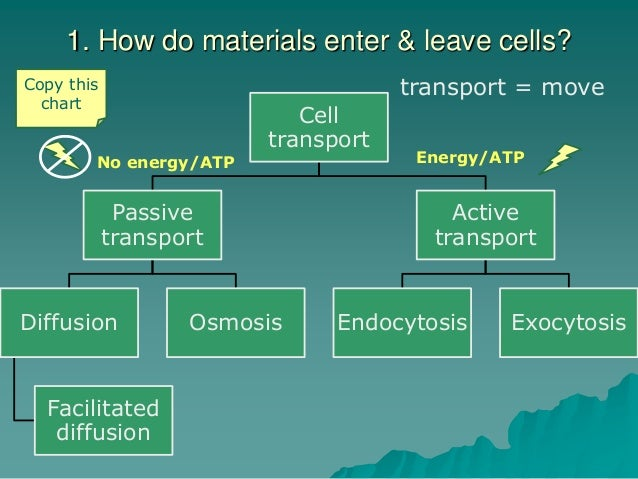 Ch. 2.3 Cell transport
