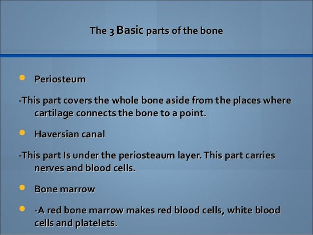 human skeletal system essay Muscle tissue is one of the four basic tissue types that exist in the human body there are three different muscle tissues: skeletal, cardiac, and smooth they all.