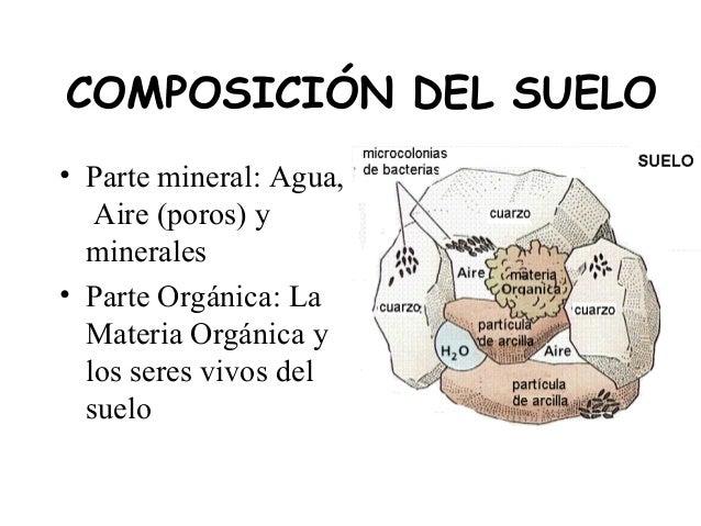 Materia org nica y vida del suelo for Informacion sobre el suelo