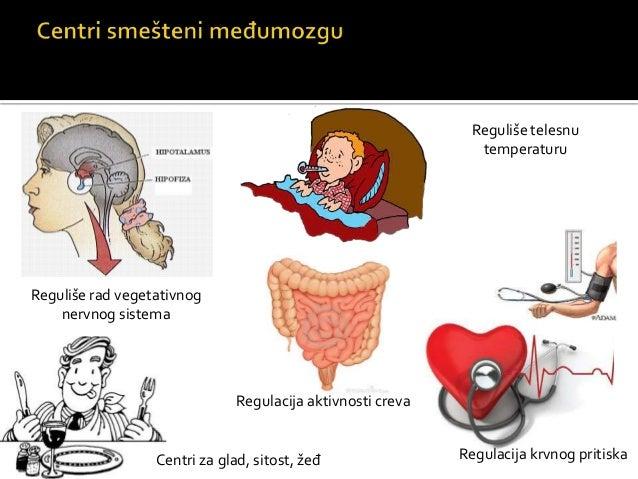 Srednji mozak
