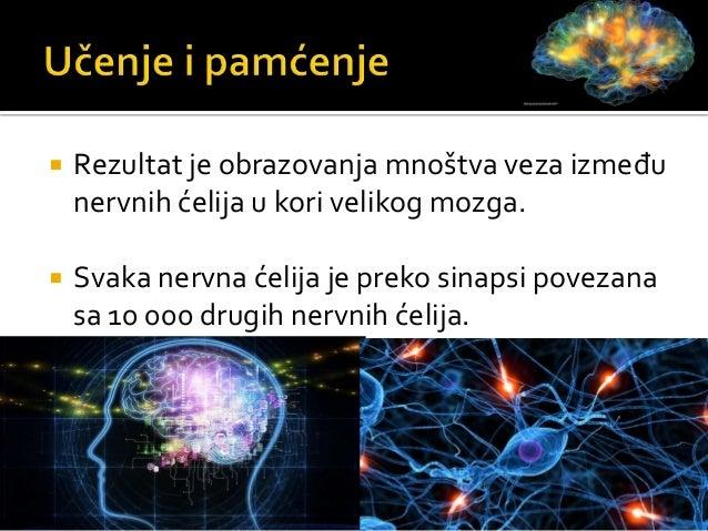 Centralni nervni sistem-mozak