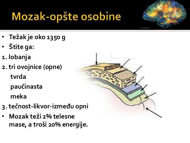 Produžena moždina Srednji mozak Međumozak Prednji (veliki) mozak Zadnji (mali) mozak