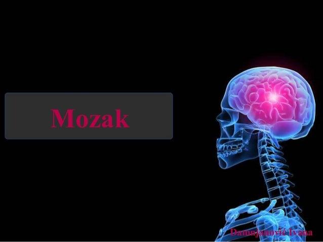 Mozak Damnjanović Ivana