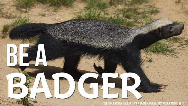 BE A BADGERSort of. A honey badger isn't a badger, per se. Just relax and go withit.