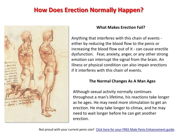 How Does Erection Normally Happen?