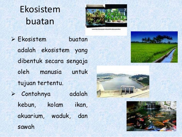 Media Pembelajaran Ekosistem