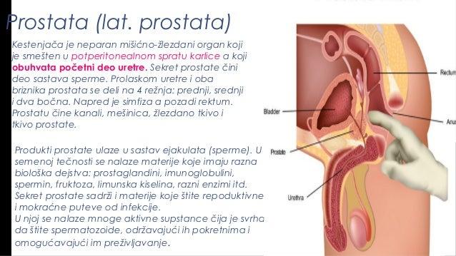 rast penisa
