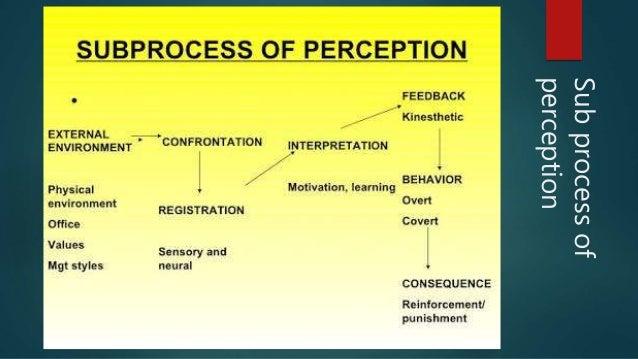 perception in organisational behaviour pdf