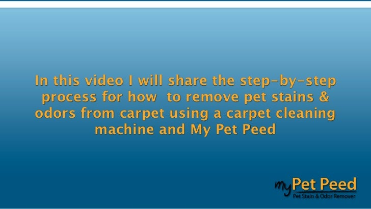 my pet peed