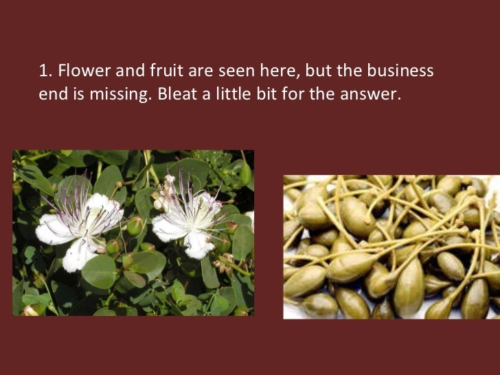 1. Flower and fruit are seen here, but the business end is missing. Bleat a little bit for the answer.