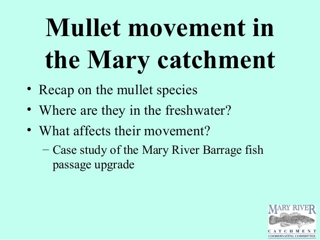 Mullet movement inthe Mary catchment• Recap on the mullet species• Where are they in the freshwater?• What affects their m...
