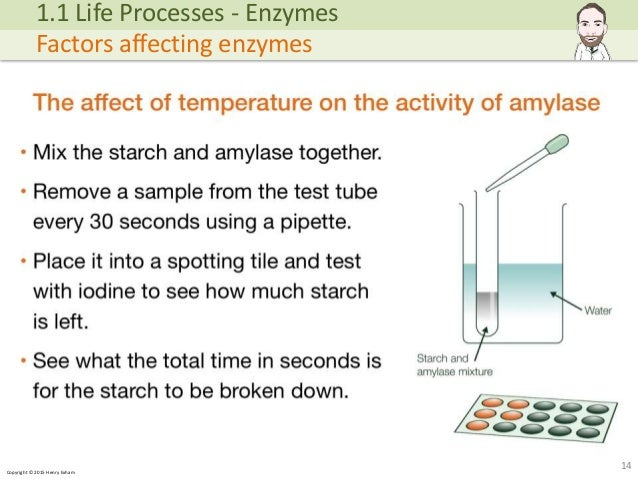 conclusion for amylase lab with starch temperature Add 2 cm 3 of amylase enzyme solution to a test tube place 2 cm 3 of starch  solution into the same tube finally add 1  warmer temperatures may denature  the enzymes and the reaction will take longer at lower temperatures   conclusions.