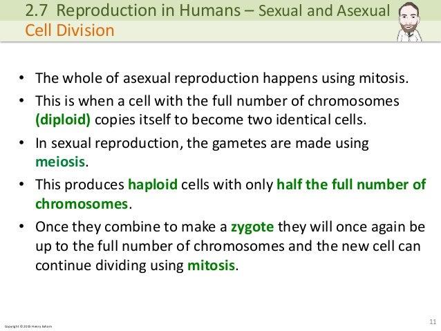 Asexual reproduction definition igcse cambridge