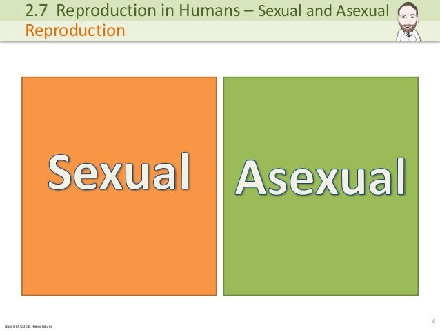 Differences Between Asexual And Sexual