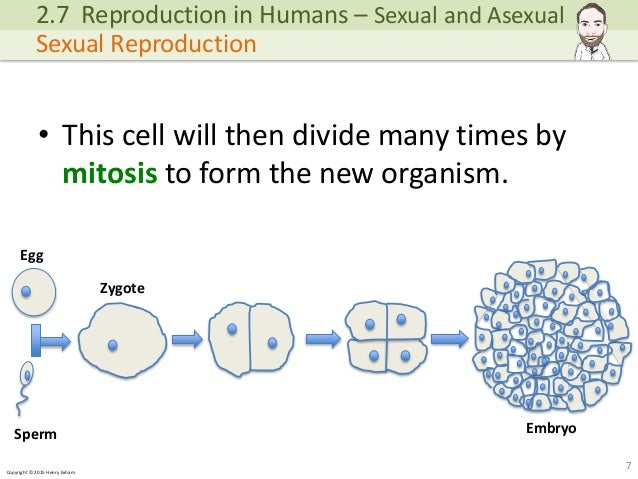 Asexual reproduction in human cells