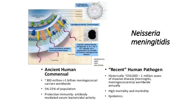Prof David Stephens @ Meningitis & Septicaemia in Children & Adults Slide 3