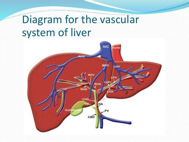 Mri Abdomen Dynamic Study Tri Phasic Of Liver