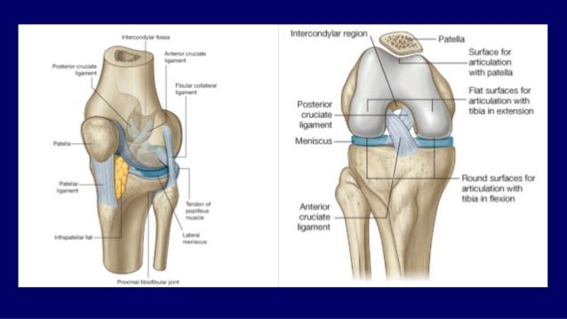 Mri anatomy of knee Dr. Muhammad Bin Zulfiqar