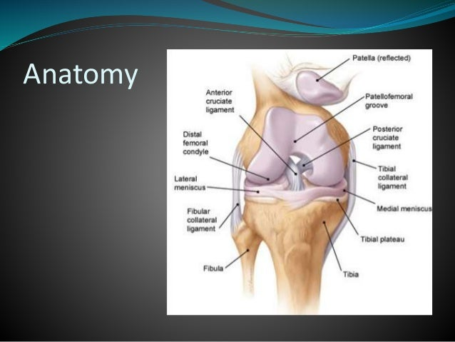 Mri of knee ccuart Gallery