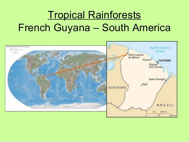 Tropical Rainforests French Guyana – South America
