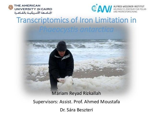 Transcriptomics of Iron Limitation in Phaeocystis antarctica Mariam Reyad Rizkallah Supervisors: Assist. Prof. Ahmed Moust...
