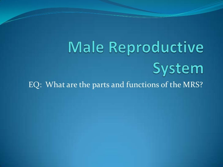 EQ: What are the parts and functions of the MRS?