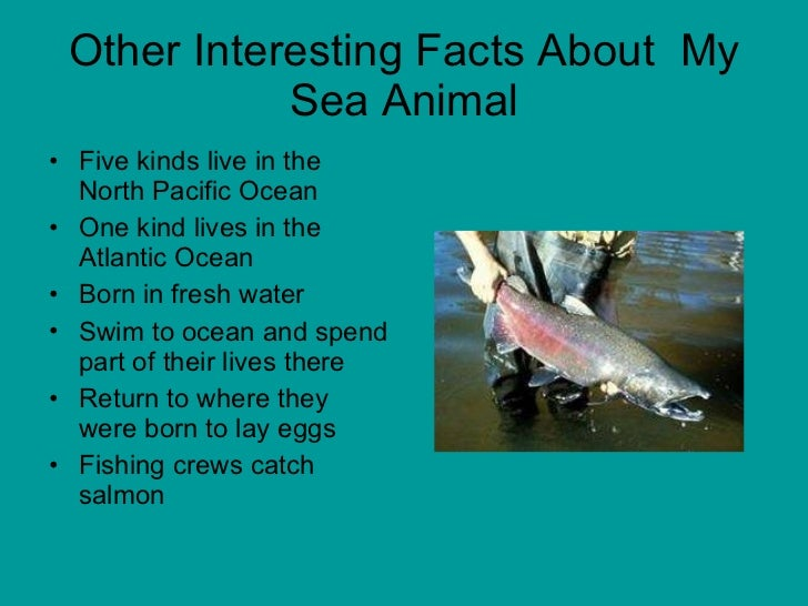 Image of: Amazing 12 Other Interesting Facts About My Sea Animal Slideshare Mrs Anthony Grade Sea Animals