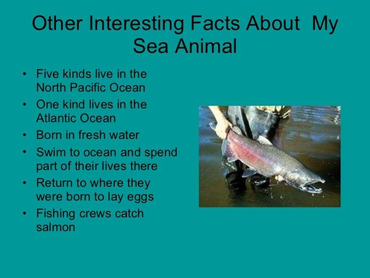 Image of: Amazing 12 Other Interesting Facts About My Sea Animal Slideshare Mrs Anthony Grade Sea Animals