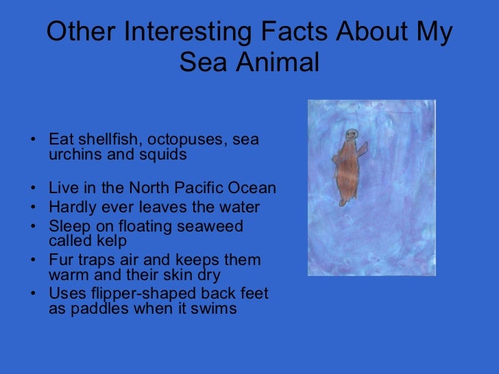 Image of: Amazing Things 24 Other Interesting Facts About My Sea Animal Slideshare Mrs Anthony Grade Sea Animals